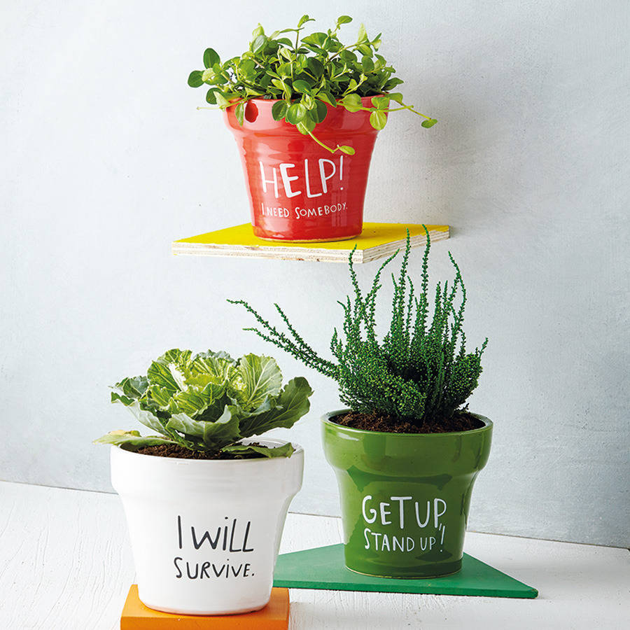 Lyrical Plant Pots