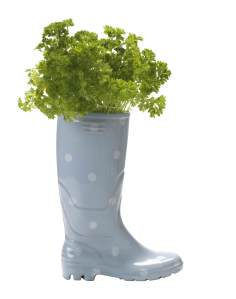 Wellington boot planter, £30