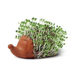 Katy Pearson Cress Plant Pot