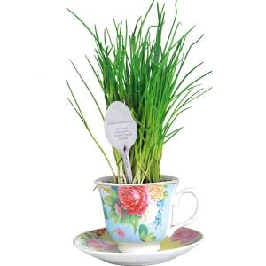 Teacup chives grow set