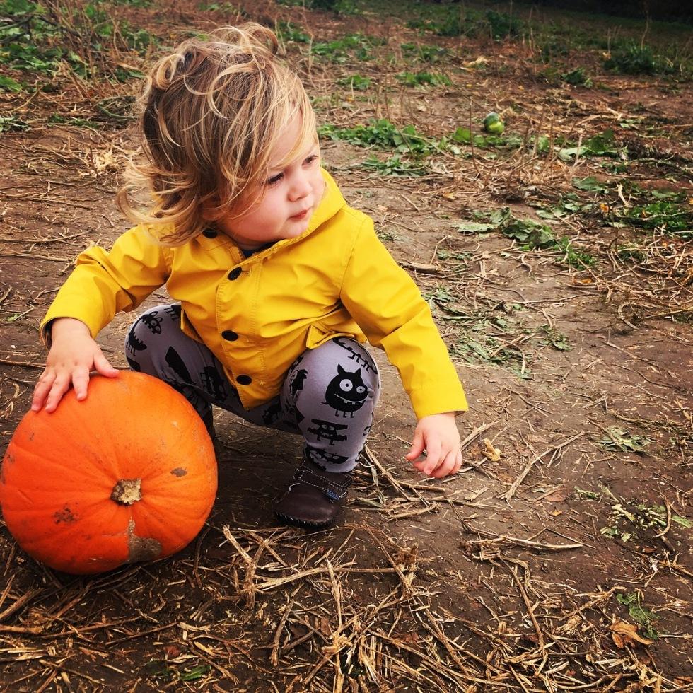 Katy Pearson, Sonny Jim, pumpkin, Look What Panda Made