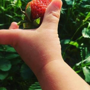 Strawberry picking, Katy Pearson, #whatkatydidUK