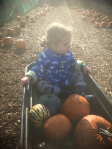 pumpkin picking, Sonny Jim